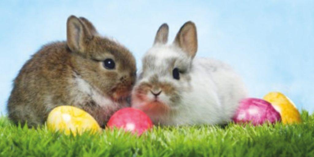 Wir wünschen Allen ein frohes Osterfest und eine gute Zeit.